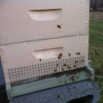 Hive activity on December 21, 2013. The first day of Winter.